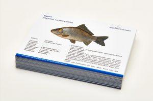 Angelschein Dresden Fisch Lernkarten Lexikon Giebel