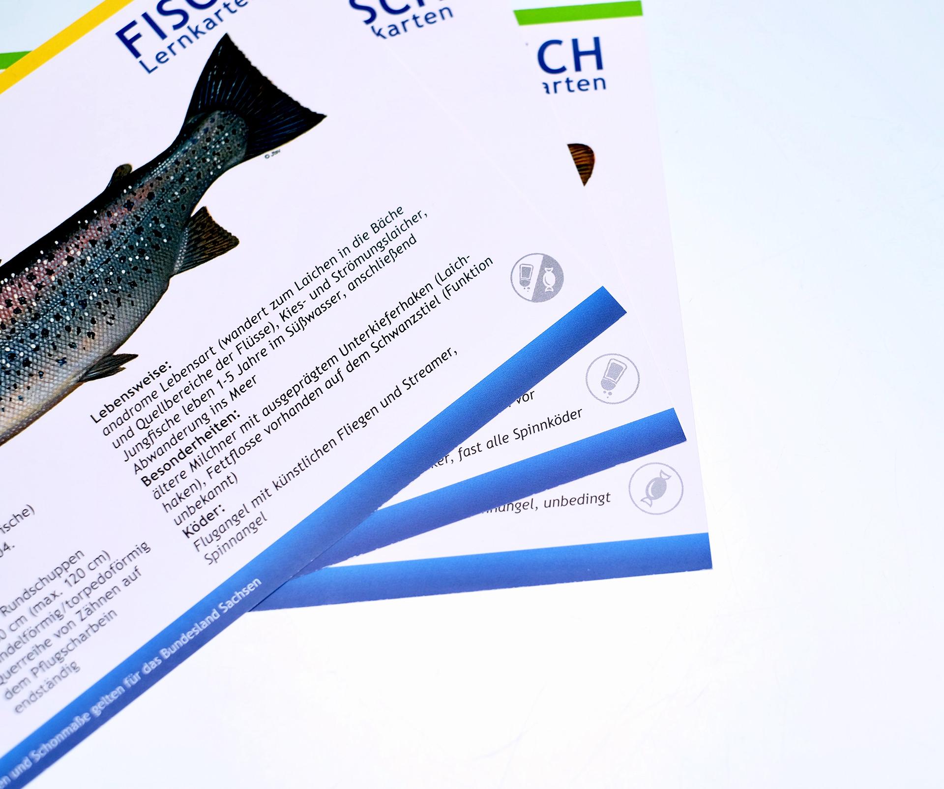 Fisch Lernkarten Angeln Fischereischein Gutschein Dresden Kurse
