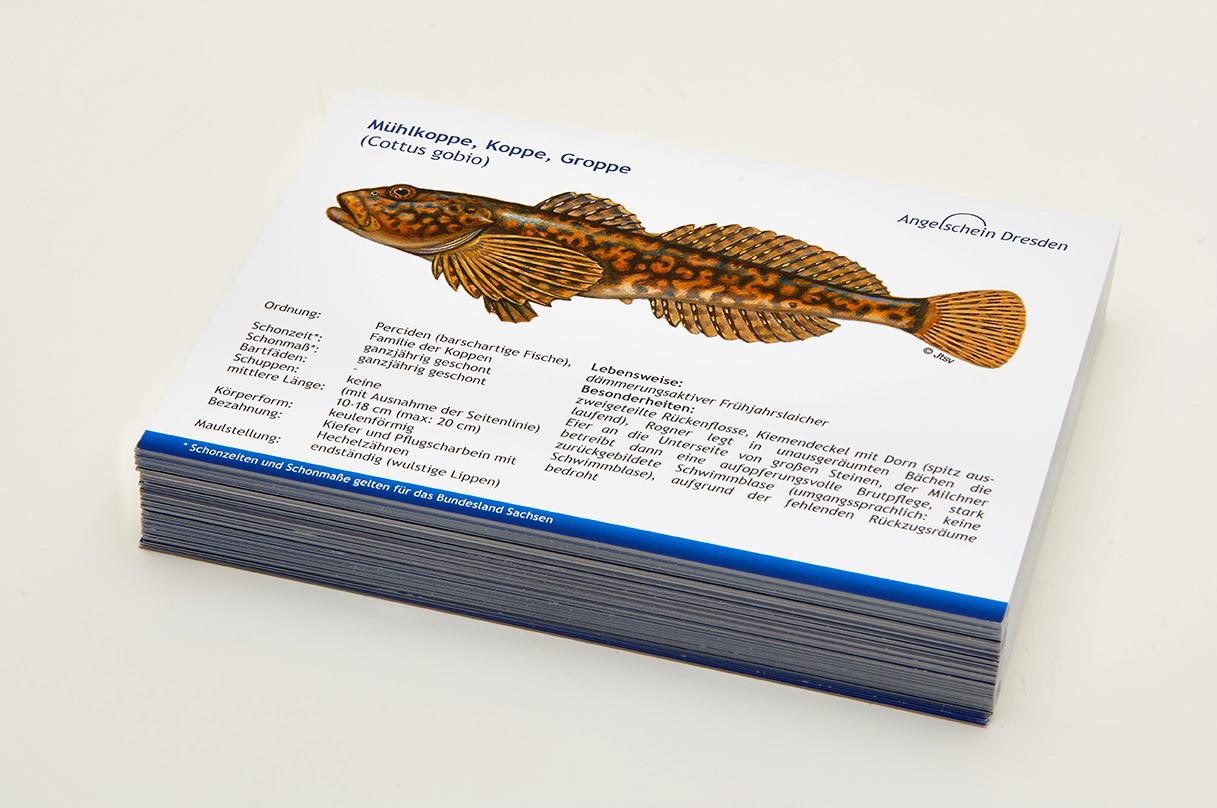 Angelschein Dresden Fisch Lernkarten Lexikon Muehlkoppe
