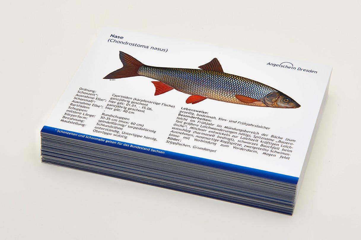 Angelschein Dresden Fisch Lernkarten Lexikon Nase